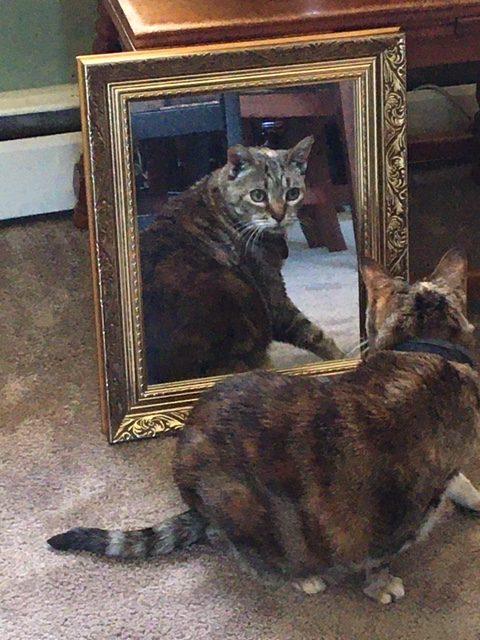 Josie Thru the Looking Glass.JPG